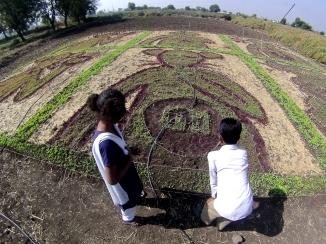 Details of Land Art No. 5